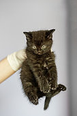 Black cat in the hands of a veterinarian. Concept pets, treatment, veterinary clinic