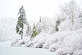 Snow Covered Trees on a Lake New Brunswick Canada