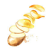 Natural raw potato slices turning into chips. Watercolor hand drawn illustration isolated on white background