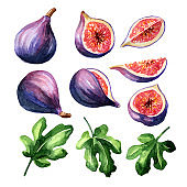 Fresh ripe purple fig fruit and leaf set. Watercolor hand drawn illustration isolated on white background