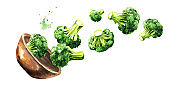 Bowl with fresh broccoli. Hand drawn horizontal watercolor illustration, isolated on white background