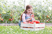 Smiling girl looking at fresh organic tomatoes in crate at farm