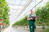Serious gardener carrying crate while walking in greenhouse