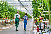Senior farmer carrying tomatoes in crate while young female supervisor holding report