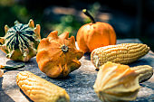 Selection of pumpkins and squash on textured metal background