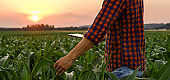 View of man on corn field