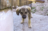 Beautiful dog in a cage with sad eyes. Domestic animals in the nursery. Stock photo