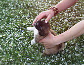 Play with a little puppy on the lawn grass. child is played on the street. Background for design