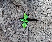 Plant seedling growing in tree stump