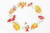 Flat lay frame with colorful autumn leaves and berries on a white background