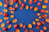 Flat lay composition with colorful autumn leaves on a blue background