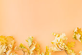 Flat lay border with colorful autumn leaves on a colored background