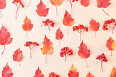 Flat lay pattern with colorful autumn leaves and berries on a color background