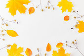 Flat lay frame with colorful autumn leaves and dry plants on a white background