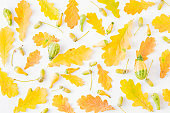 Flat lay pattern  with colorful autumn leaves and acorns on a white background