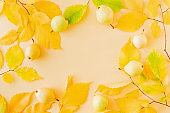 Flat lay composition with colorful autumn leaves, yellow pears on a color background