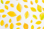 Flat lay pattern with colorful autumn leaves on a white background