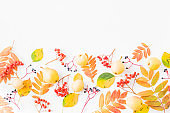 Flat lay border with colorful autumn leaves and berries on a white background