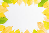 Flat lay composition with colorful autumn leaves on a white background