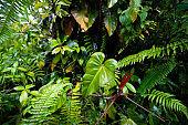 Lush Rainforest Plant Background in Kona Hawaii