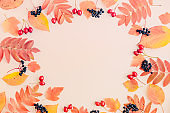 Flat lay frame with colorful autumn leaves and berries on a color background