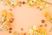 Flat lay frame with colorful autumn leaves and acorns on a color background