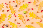 Flat lay pattern with colorful autumn leaves, acorns and berries on a color background