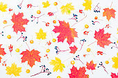 Flat lay pattern with colorful autumn leaves and berries on a white background