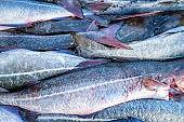 Silver colored fish
