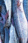 Fish skin