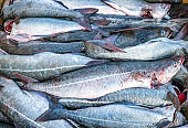 Fresh fish on dry land
