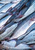 Fresh fish on fish market