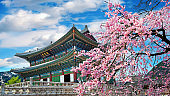 Cherry blossoms in spring, Seoul in Korea.