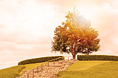 View of One big green tree on top of hill or mountain with lawn or grass field with sunset or sunrise day . - Image