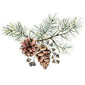 Watercolor botanical set with pine branches, cones and seeds. Hand painted winter holiday plants isolated on white background. Floral illustration for design, print, fabric or background.
