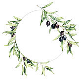 Watercolor wreath with olive berries and leaves. Hand painted floral circle border with olive fruit and tree branches with leaves isolated on white background. For design, print and fabric.