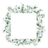 Watercolor eucalyptus square card. Hand painted eucalyptus branch and leaves isolated on white background. Floral illustration for design, print, fabric or background.