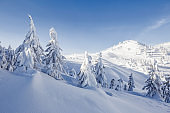 Winter scenery in the sunny day. Mountain landscapes. Trees covered with white snow.
