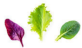 Variety of Salad leaves. Isolated Mixed Salad leaves with Spinach, purple Chard, lettuce on white background. Flat lay. Top view