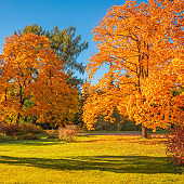 Autumn scene with Golden leaves, Autumnal trees, meadow, blue sky  and sun shining beams. Beautiful Countryside landscape