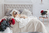 Happy smiling golden retriever puppy dog in luxurious bright colors classic eclectic style bedroom with king-size bed and bedside table, red flowers. Pets friendly  hotel or home room.