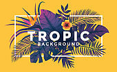 Tropical Background with frame 2
