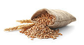 Sackcloth with wheat grains and spikelets on white background