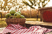 Apples in a basket in the garden