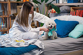 Cheerful young woman putting a bow on her cute dog in the morning