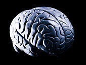 Human brain model in high contrast black and white