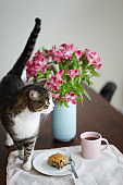 Domestic cat on a dining table