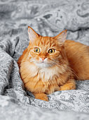 Cute ginger cat lying in bed. Fluffy pet comfortably settled to sleep or to play. Cozy home background, morning bedtime.