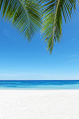 Beautiful green palm leafs with tropical beach background