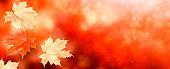 autumn landscape with bright colorful foliage.